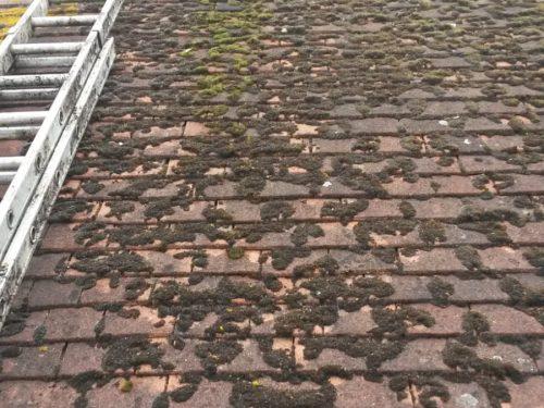 Roofing Moss Removal Sittingbourne Maidstone Faversham Kent